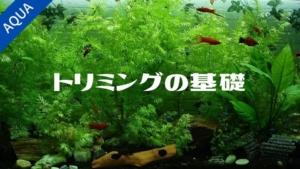 【アクアリウム】水草トリミングのポイント【初心者向け】