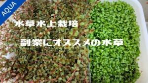 【アクアリウム】副業にオススメの儲かる水草7選