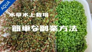 【アクアリウム】水草水上栽培って儲かるの?初心者でもできるメルカリでの副業方法